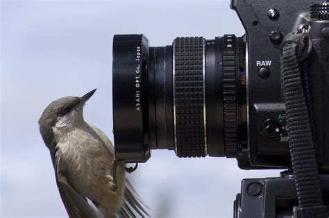 file bird sitting on camera jpg wikimedia commons