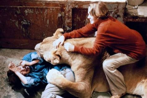 film the lion roars surrender to the void films that i saw october 2016