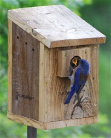 blue bird house hole size wooden birdhouses blue bird house birdhouse hole size