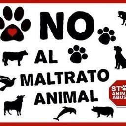 no maltrato animal no maltrato animal sianimales twitter