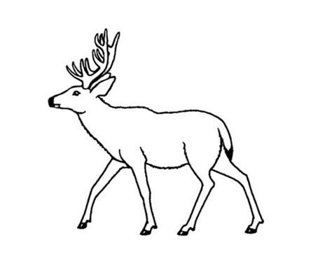 coloring pages of mule deer mule deer coloring page coloring book