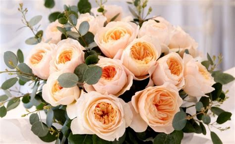 gambar bunga juliet rose aneka info unik