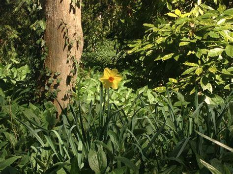 giardino degli agrumi villa pisani e il giardino degli agrumi oltreilbalcone