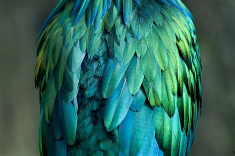 korvi feathers heidi c vlach