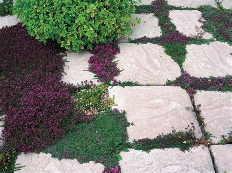 alternatives to grass landscaping without grass hgtv