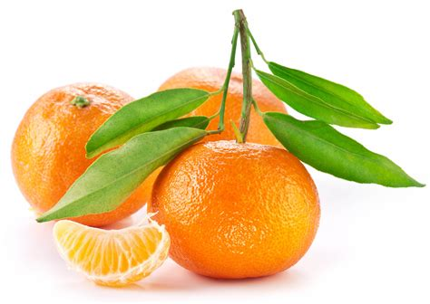 images of fruit tangerine fruit on a branch 4241007 5267x3744 all for