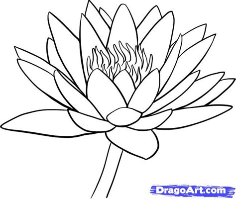 how to draw hands by lily draws on deviantart how to draw a water lily step by step flowers pop