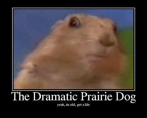 Dramatic Squirrel Meme - the dramatic prairie dog picture ebaum s world