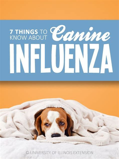 7 Things You Should About The Flu by 7 Things To About Canine Influenza Flu Pet