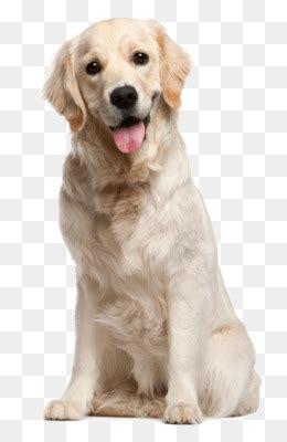 anjing  gratis dog grooming anjing kucing