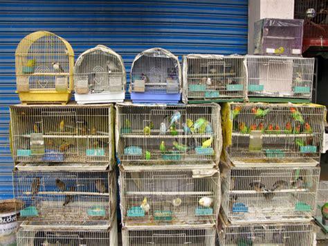 bird store
