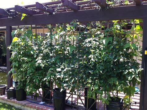 backyard hydroponics system the bgh outdoor hydroponics grow guide 171 bettergrow hydro blog