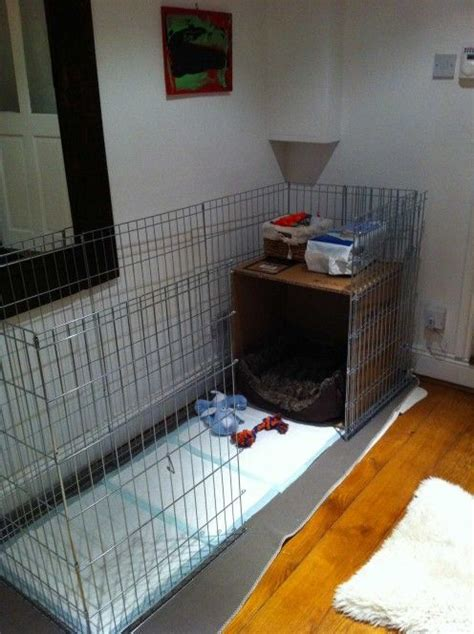 what to get for a new puppy best 25 puppy playpen ideas on puppy crate crate and crate