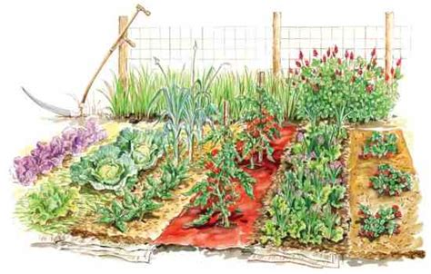 ediblegardens52 get the most from vegetable garden mulches