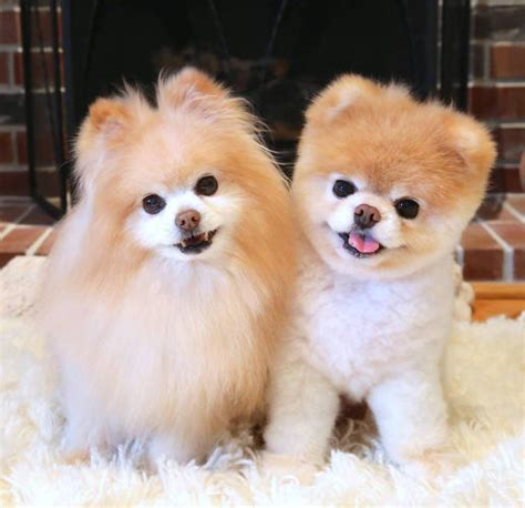 Mini Encyclopedia Dogs Explore The Wonderful World Of Dogs Ency Min inside the and wonderful world of instagram pet influencers fast company business
