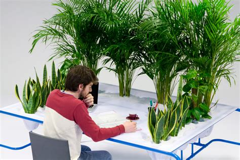 plant on desk 3 plants for growing the freshest air reclaim grow sustain