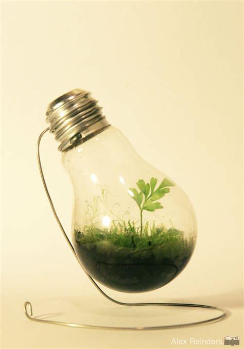 sealed bottle garden secret garden of a city dweller on pinterest terrarium