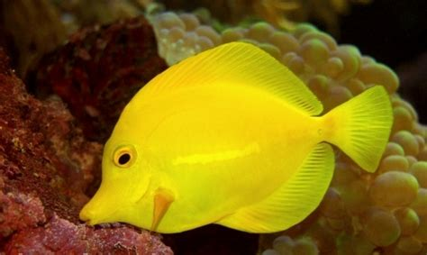 types of aquarium fish pet fish types quotes