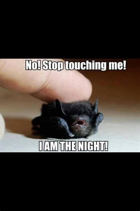 baby bat meme pictures to pin on pinterest pinsdaddy
