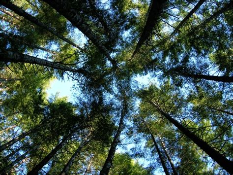 What Is A Forest Canopy Wonders At Drift Creek C Drift Creek C