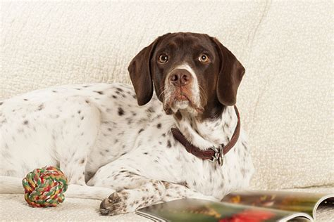can dogs get warts all about warts types causes and treatments 171 laurelwood animal hospital