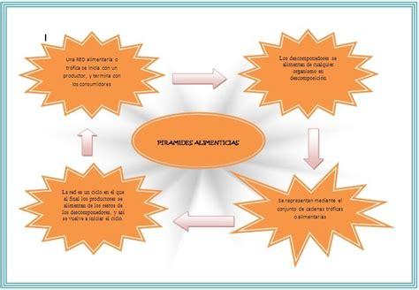 cadenas y redes y piramides alimenticias anastra piramides redes y cadenas alimenticias
