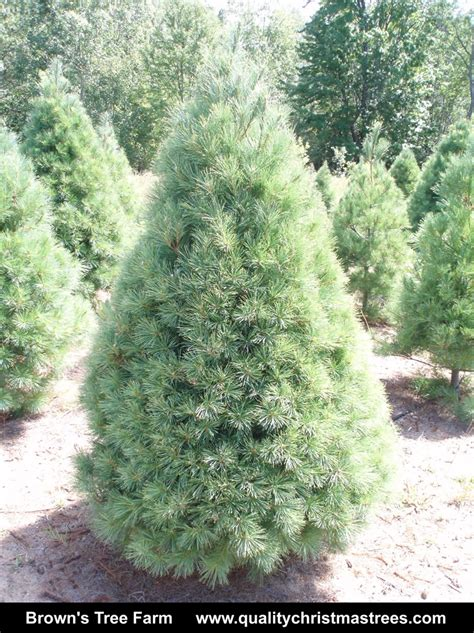 where to buy a tree buy real tree