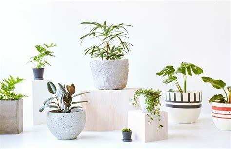 pianta da vaso piante da vaso piante da appartamento scegliere le