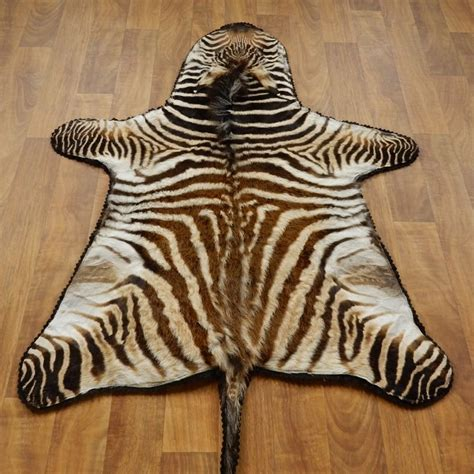 African Juvenile Zebra Rug Mount 17279 The Taxidermy Store Zebra Rug