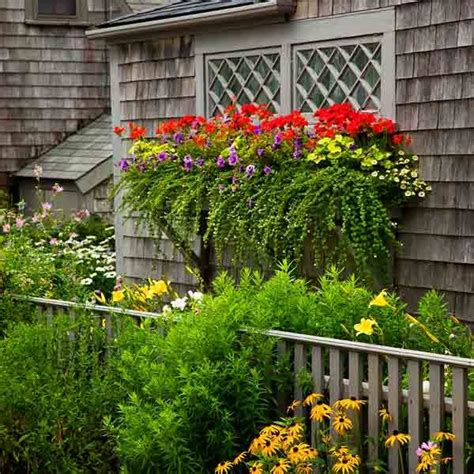 garden window boxes plant a better window box garden