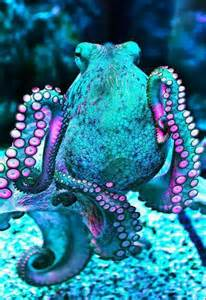 color changing octopus the world s catalog of ideas