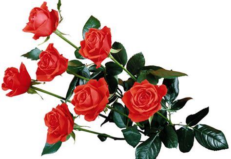 imagenes de rosas injertadas dibujo de rosas rojas imagen 3685 im 225 genes cool