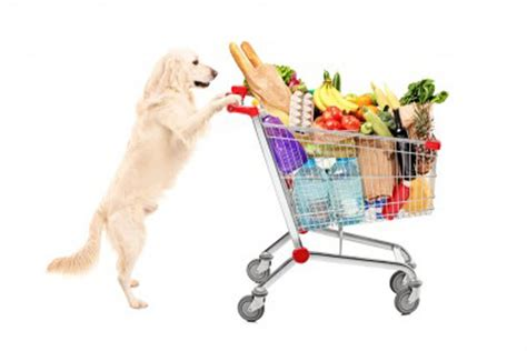 why do dogs always want food top 10 foods dogs to eat listovative