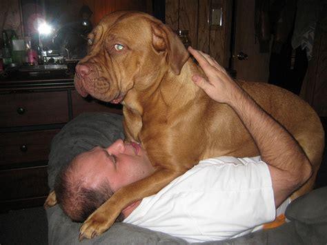 what breed hooch breed www imgkid the image kid has it