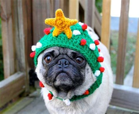 pug in a hat pug hats and on