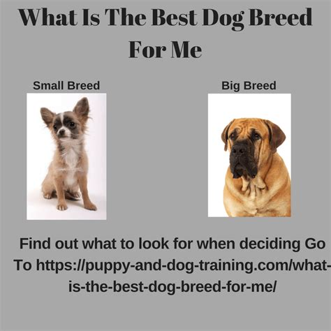 what is the right for me what is the best breed for me puppy and