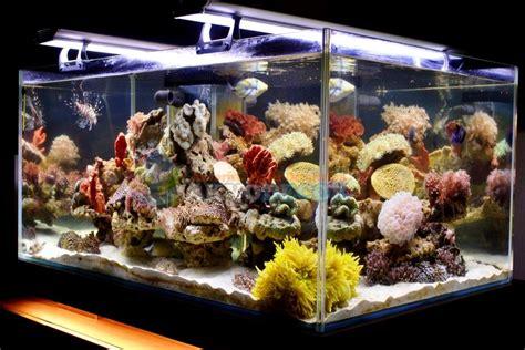 akvodecor aquarium laut aquarium tawar dekorasi
