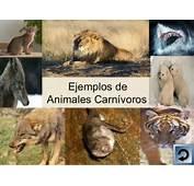 Powerpoint Animales Carn&237voros Herb&237voros Y Omn&237voros