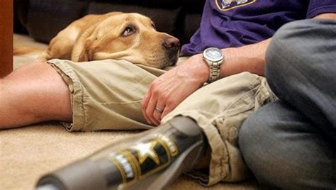 veterans therapy act therapy dogs would help veterans with ptsd new bill kpbs
