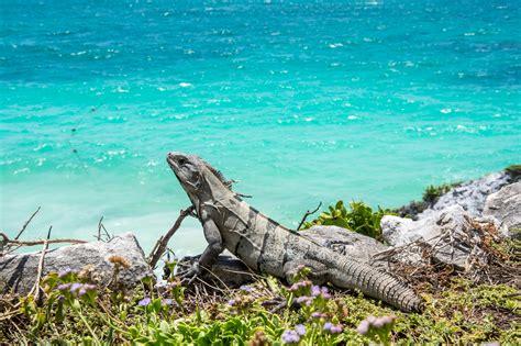 imagenes de maya mishalska la riviera maya set fotogr 225 fico m 233 xico sabroso