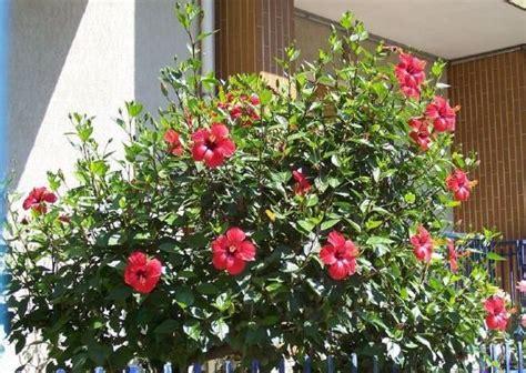 piante da terrazzo pieno sole piante da balcone resistenti al sole fotogallery donnaclick