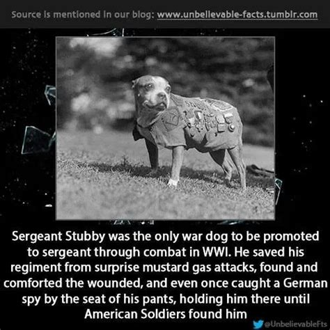 Sergeant Stubby Newspaper Dogs Are Not A New Idea Read This Report Of A Ww I They Also