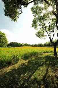 beautiful outside stunning nature landscape of the pasture land with beautiful morning sunlight in special star