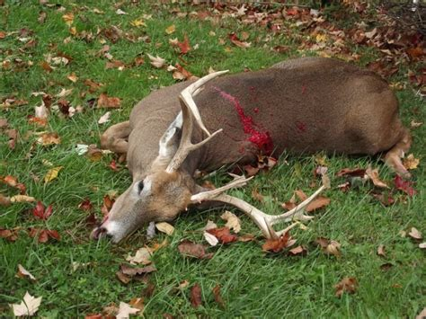 pa bow buck big deer