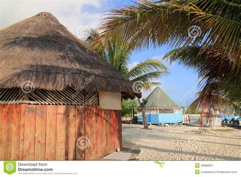 hutte tropicale palapa en bois tropical de hutte dans cancun mexique