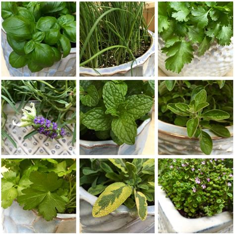 best herbs for container gardening 9 best herbs for containers swansons nursery seattle s