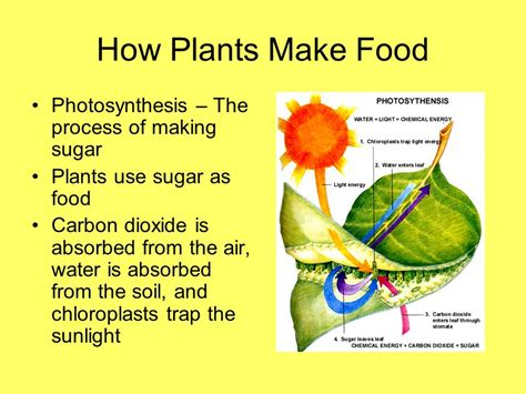 how to make flower food energy from plants chapter ppt video online download