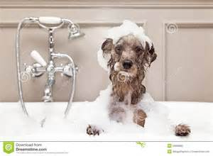 what is dogs in a bathtub taking bath stock photo image 55660892