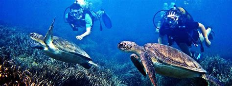 dive places diving in mauritius mauritius diving trips and diving