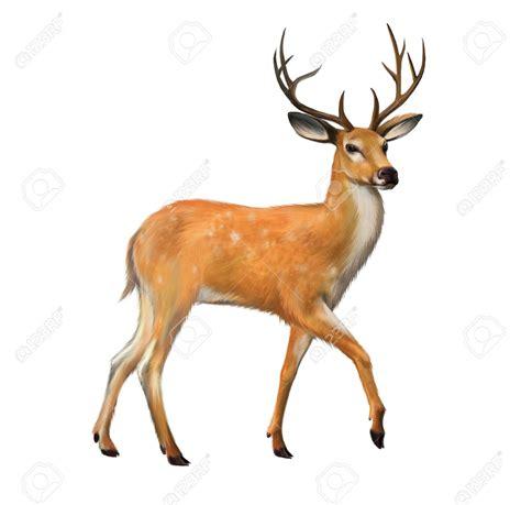 Figureminiaturpajanganbonekapatung Leich Rusa Tailed Doe deer clipart dear animal pencil and in color deer clipart dear animal